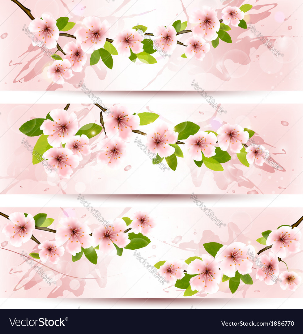 Three spring banners with blossoming sakura brunch vector | Price: 1 Credit (USD $1)