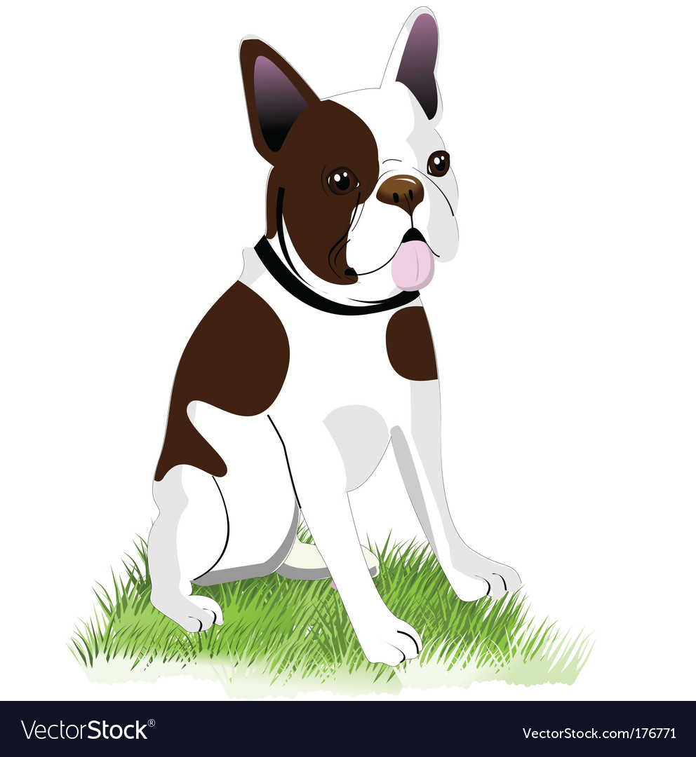 Boston terrier vector | Price: 1 Credit (USD $1)