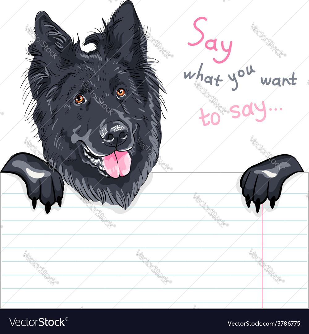 Dog belgian shepherd dog groenendael breed vector | Price: 1 Credit (USD $1)