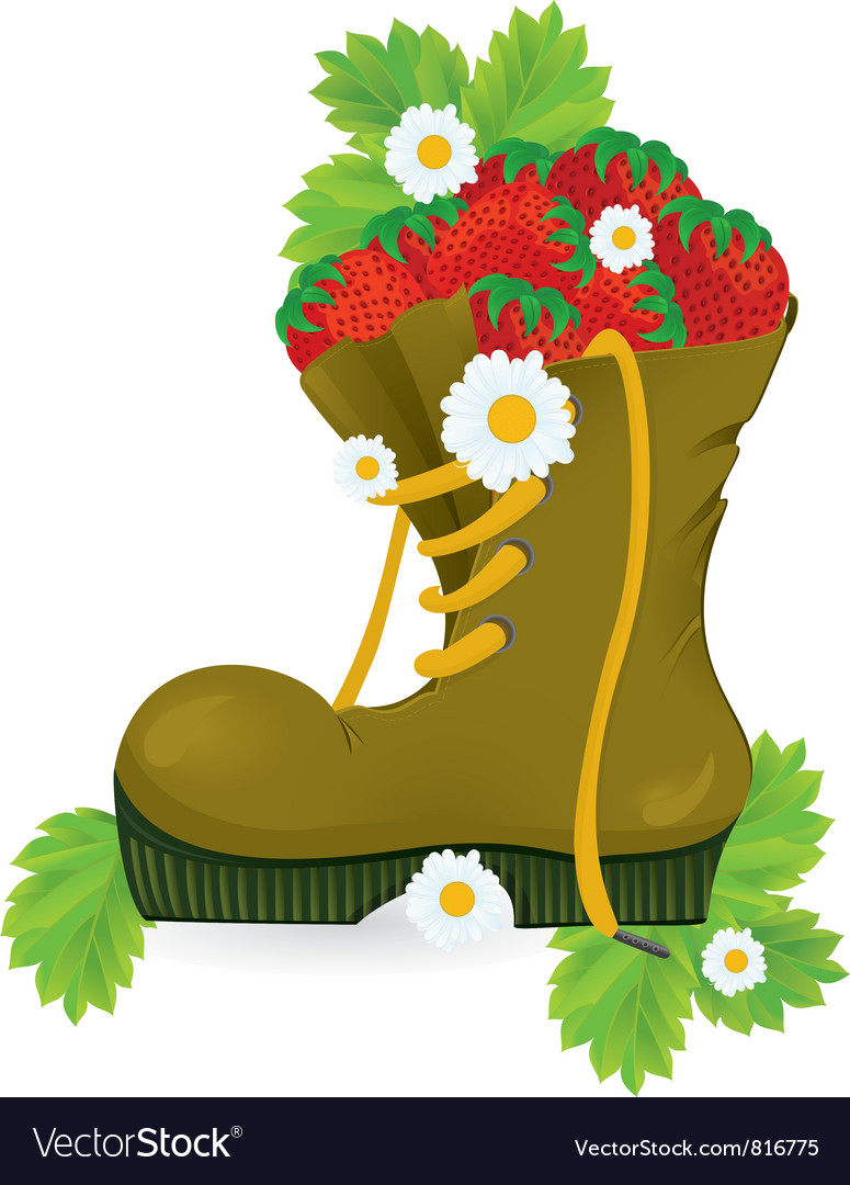 Strawberries old shoe vector | Price: 3 Credit (USD $3)