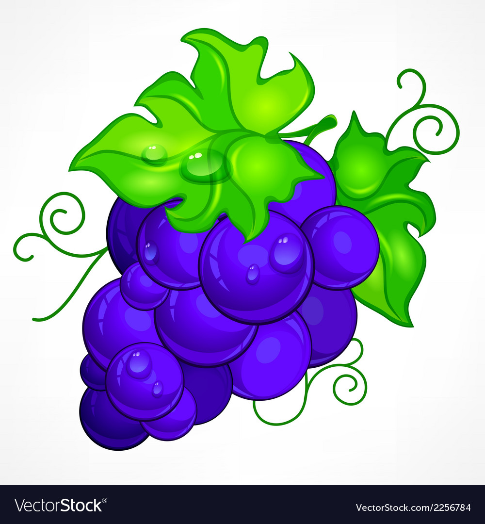 Cluster blue grapes on white vector | Price: 1 Credit (USD $1)