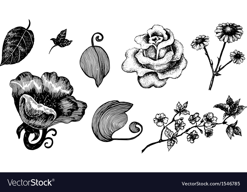 Collection of hand drawn ink flowers and leaves vector | Price: 1 Credit (USD $1)