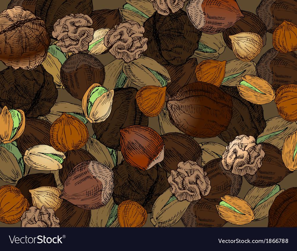 Hand drawn nuts vector | Price: 1 Credit (USD $1)