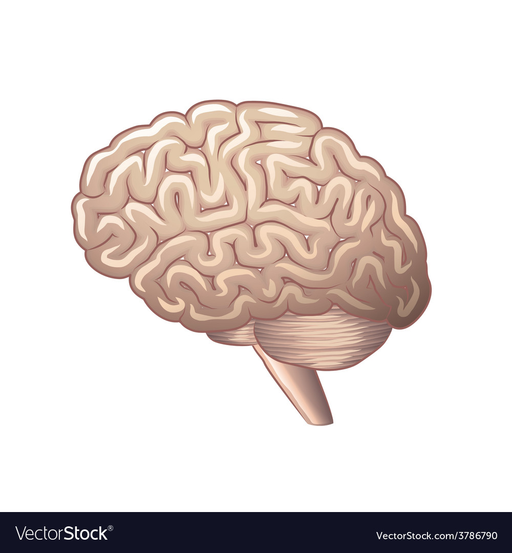 Brain isolated vector | Price: 3 Credit (USD $3)