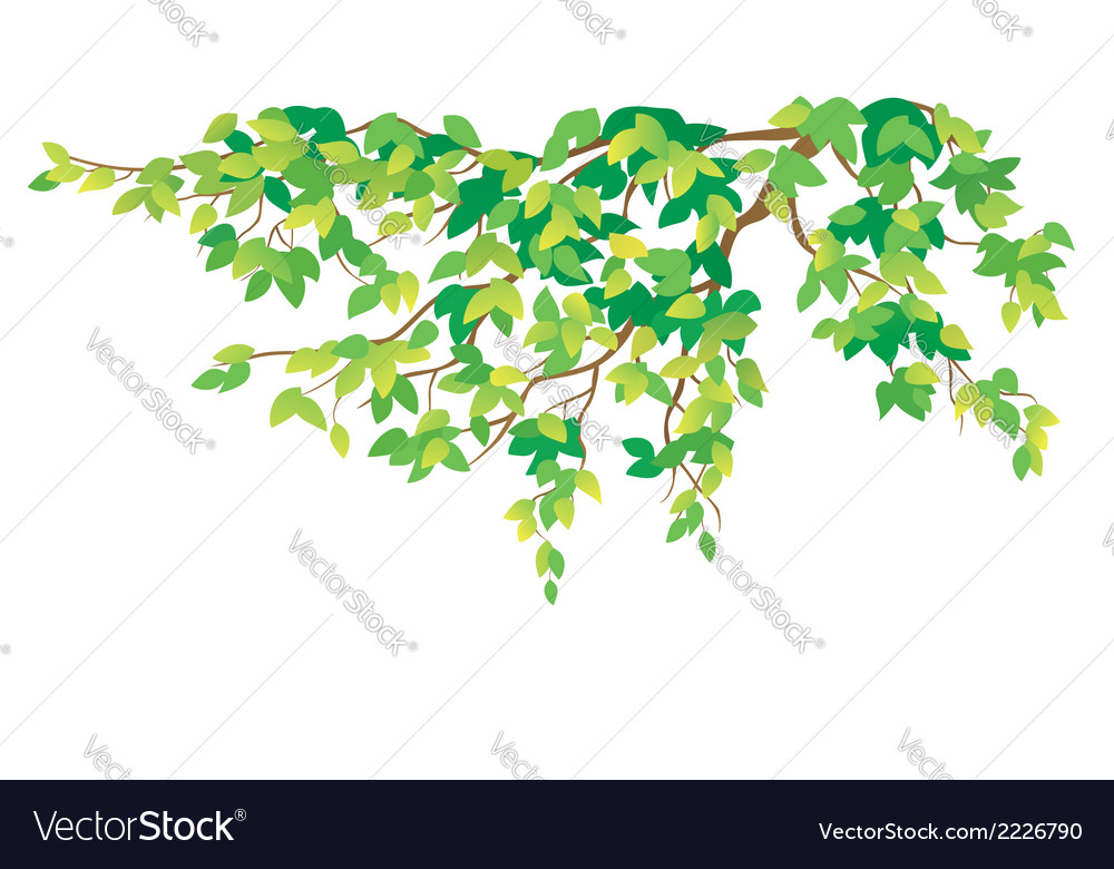 Green tree branch vector | Price: 1 Credit (USD $1)