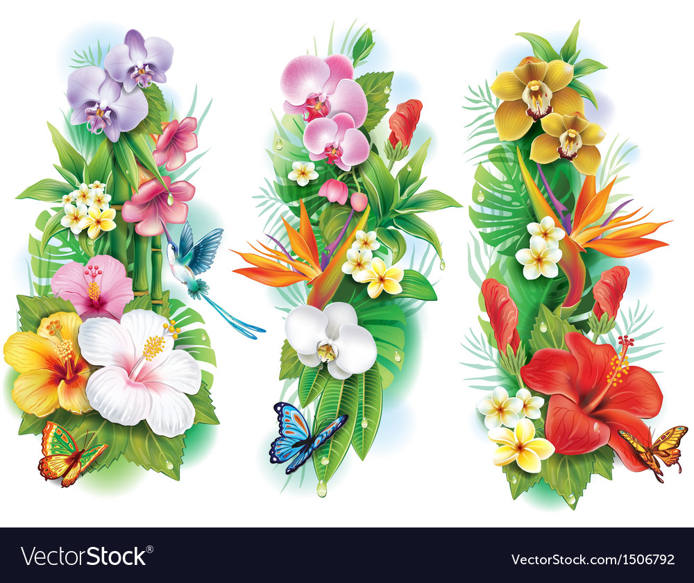 Arrangement from tropical flowers and leaves vector | Price: 1 Credit (USD $1)