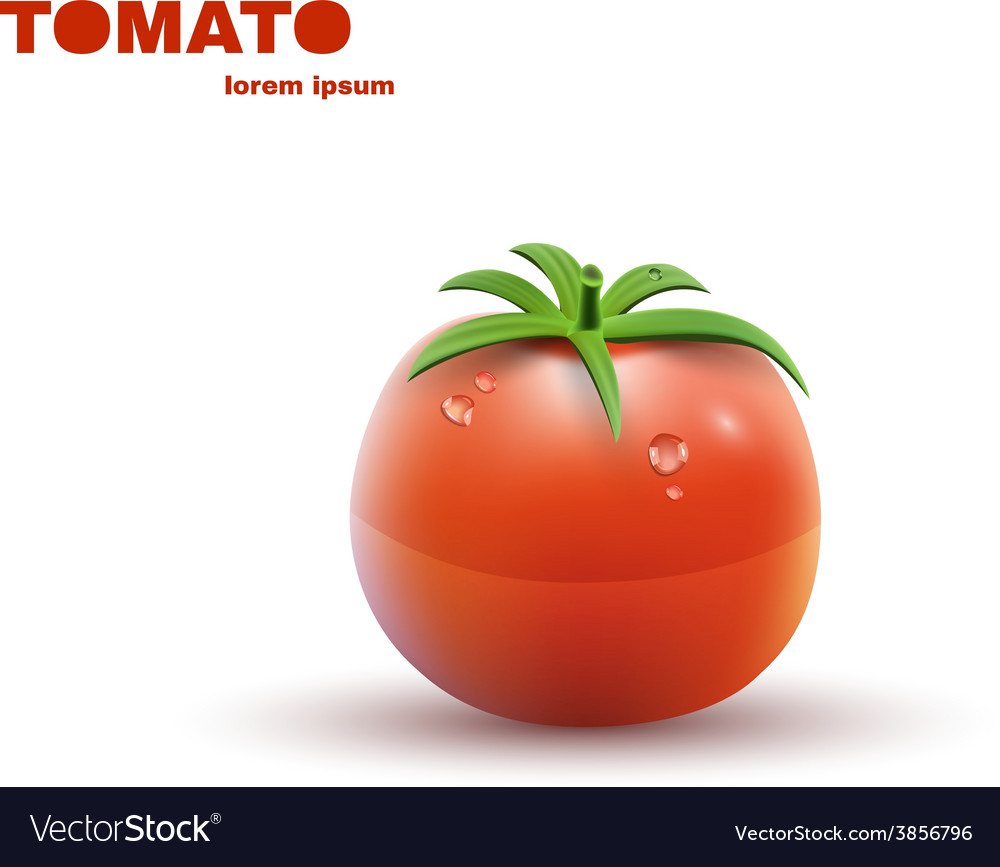 Red tomato isolated on white background vector | Price: 1 Credit (USD $1)