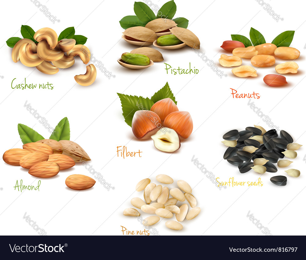 Big collection of ripe nuts vector | Price: 3 Credit (USD $3)