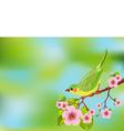 Spring bird background vector