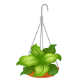 A hanging pot with green leafy plant vector