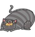 Tabby fat cat cartoon vector