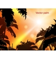 Jungle at sunset vector
