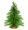 Christmas fir tree vector