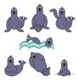 Cute seal set vector