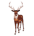 Brown deer2 vector