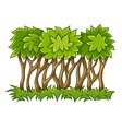 Bush with green leaves on vector