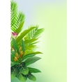 Beauty tropical forest background vector