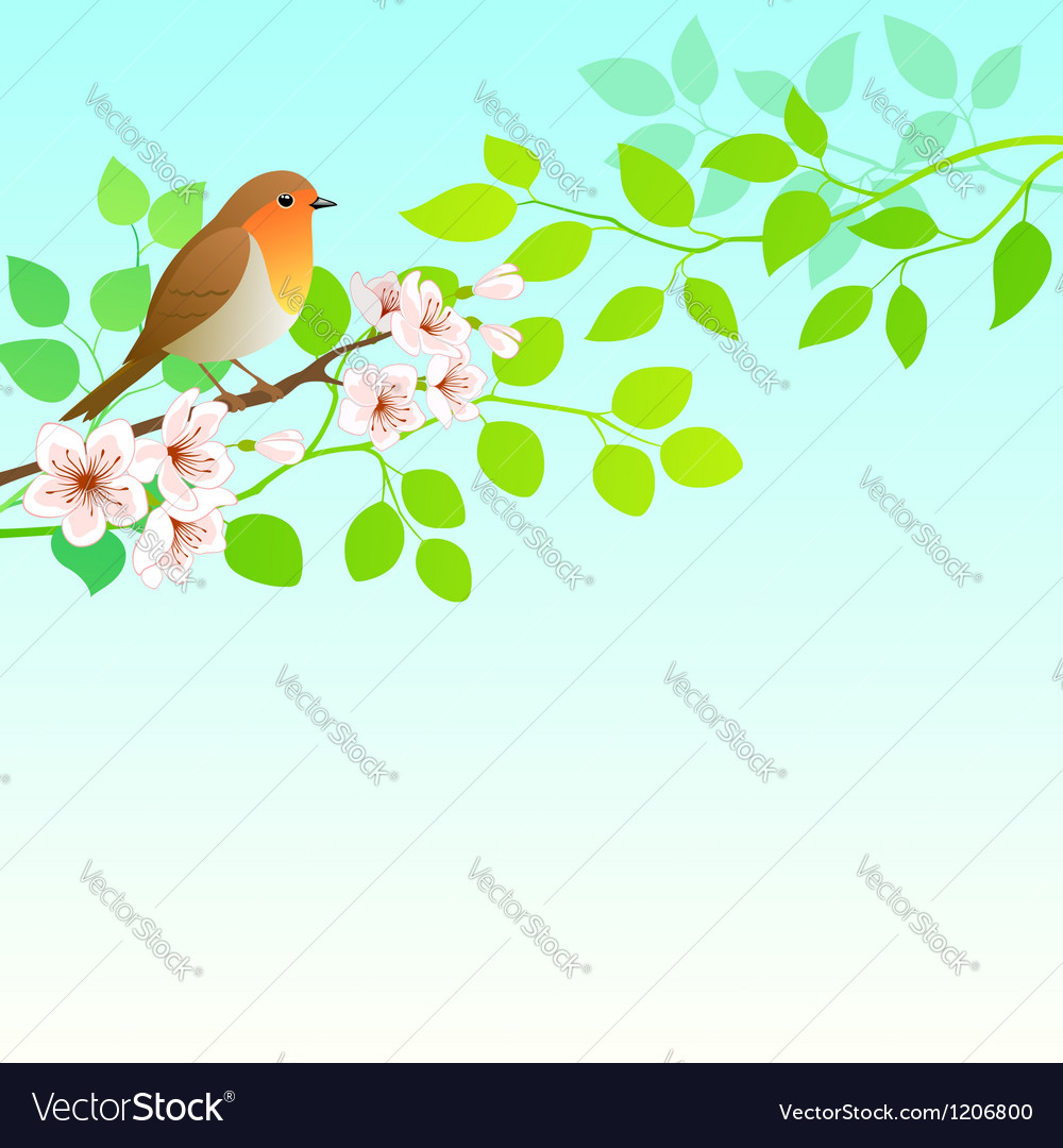 Spring robin vector | Price: 1 Credit (USD $1)