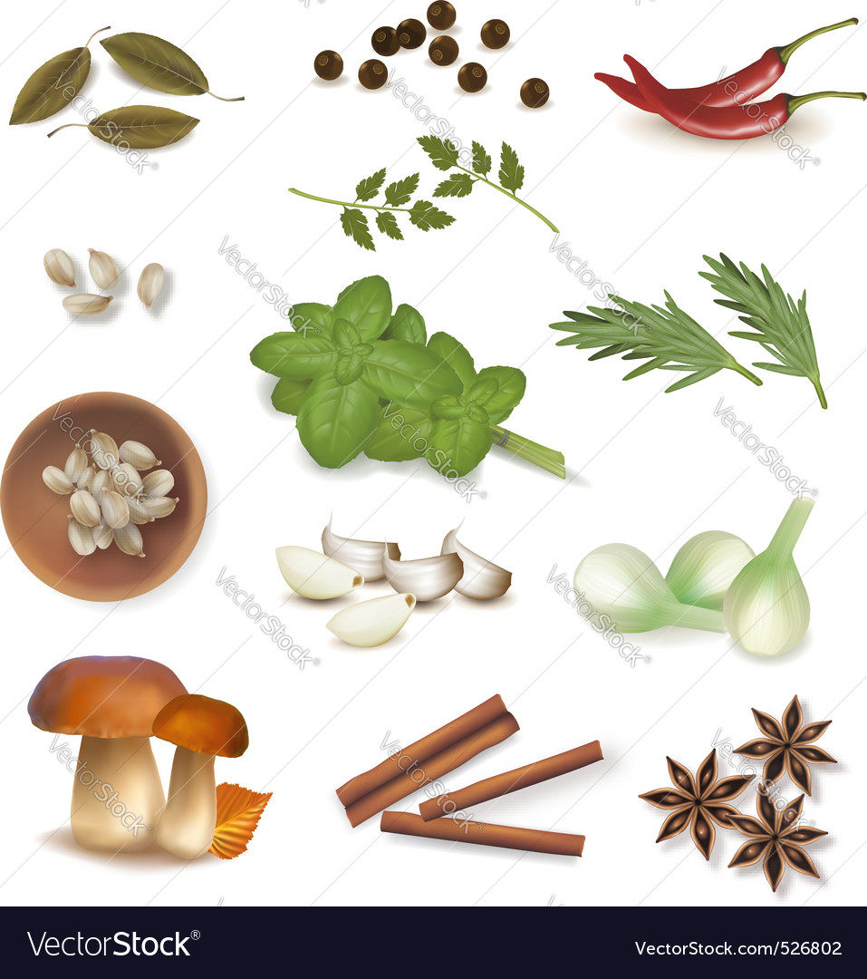 Group of spice vector | Price: 3 Credit (USD $3)