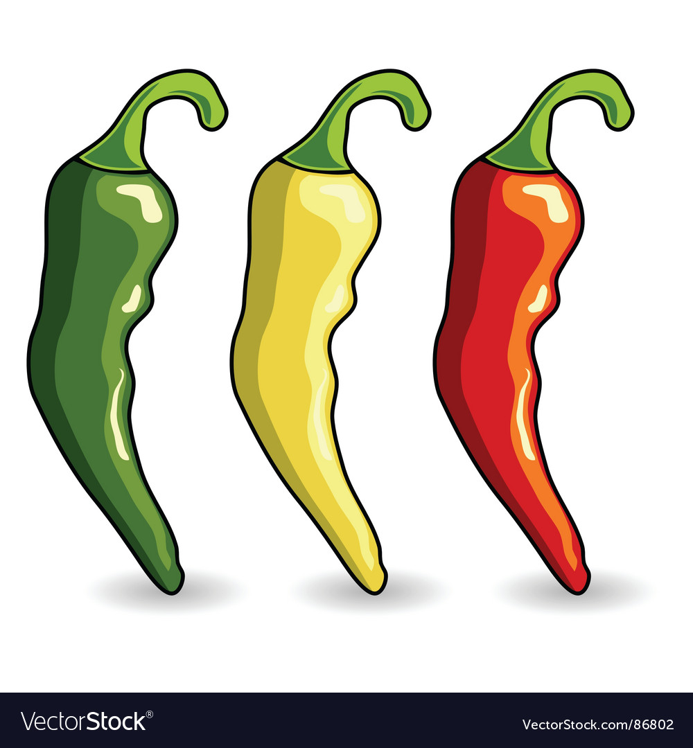 Mexican hot chili peppers vector | Price: 1 Credit (USD $1)