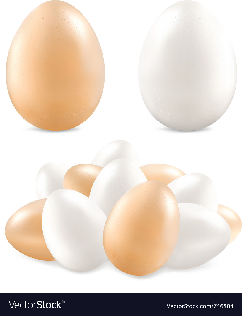 White and yellow eggs vector | Price: 1 Credit (USD $1)