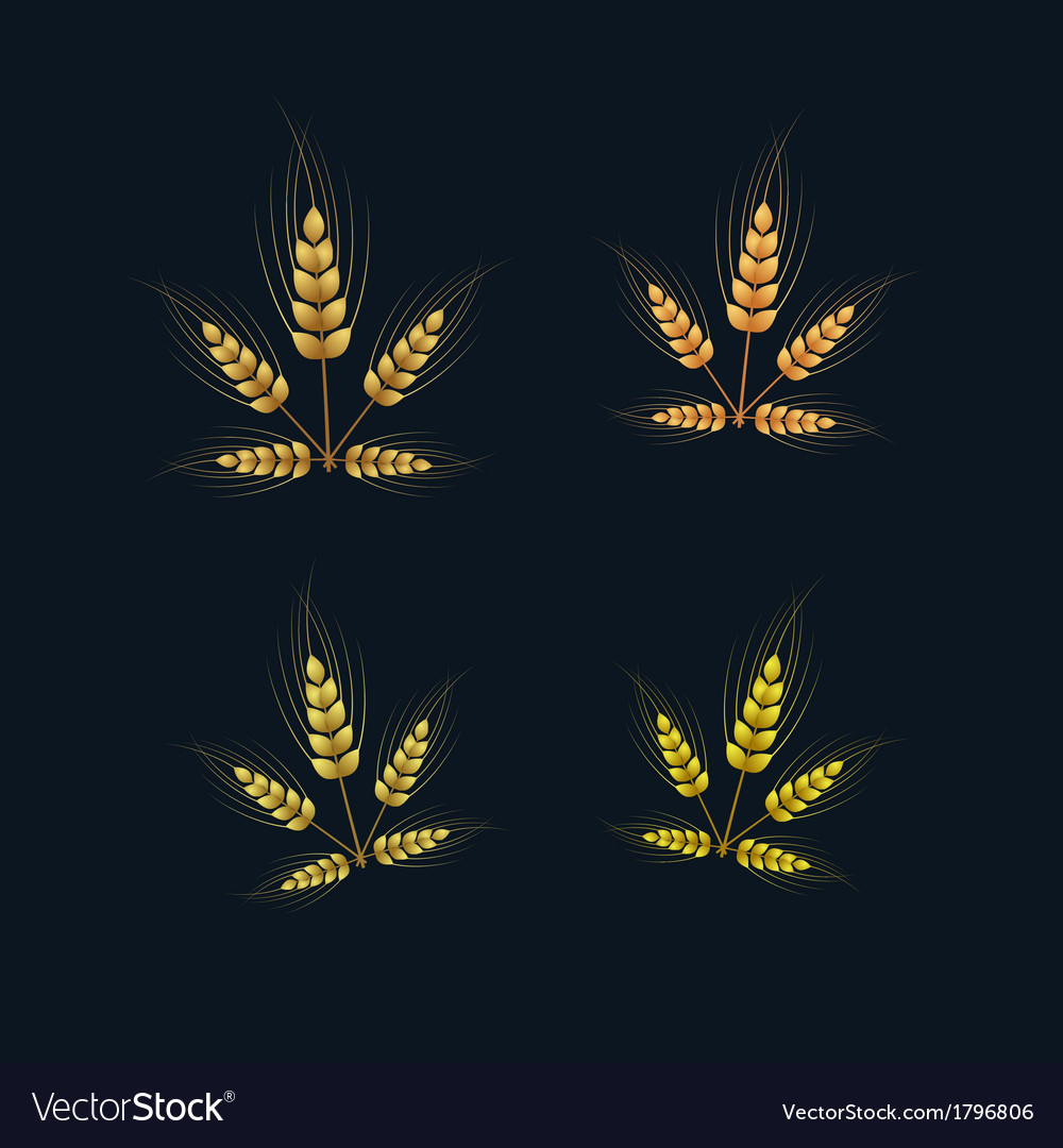 Ears of wheat set on dark background vector | Price: 1 Credit (USD $1)