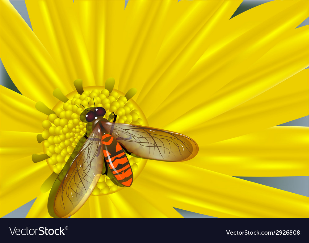 Yellow flower and colored fly vector | Price: 1 Credit (USD $1)