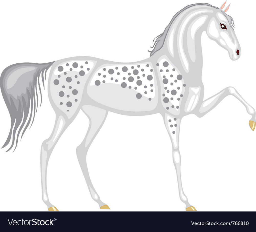 Beautiful gray in the dappled horse vector | Price: 3 Credit (USD $3)