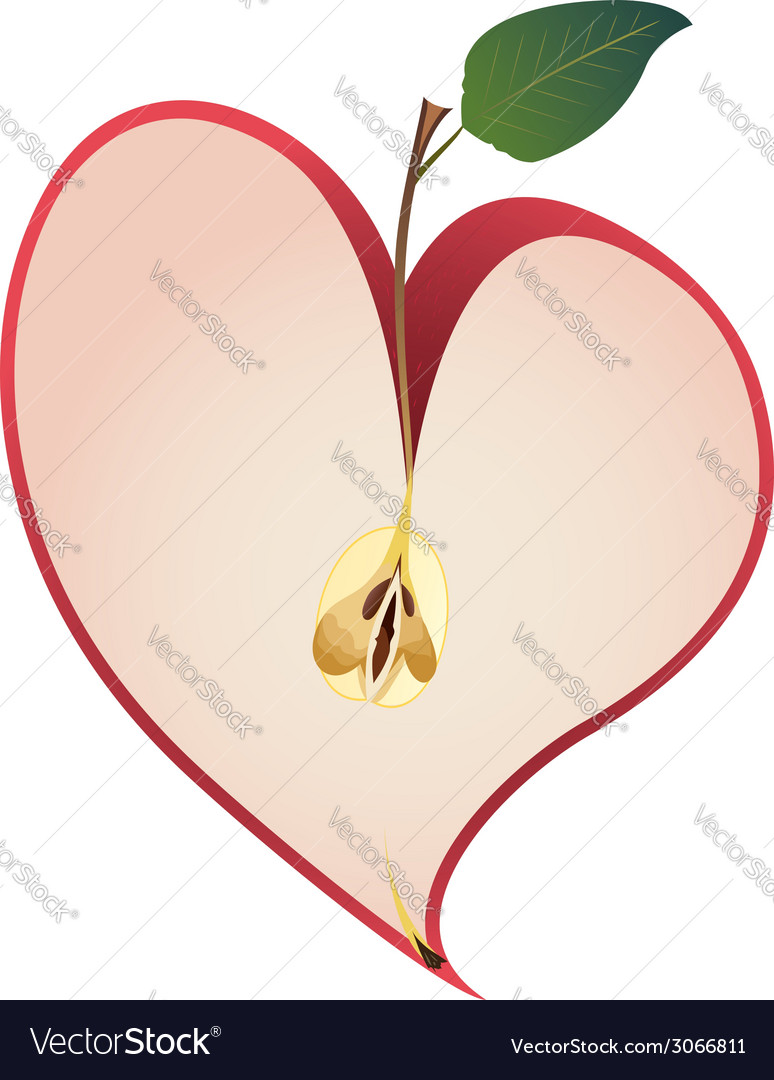 Apple as heart vector | Price: 1 Credit (USD $1)