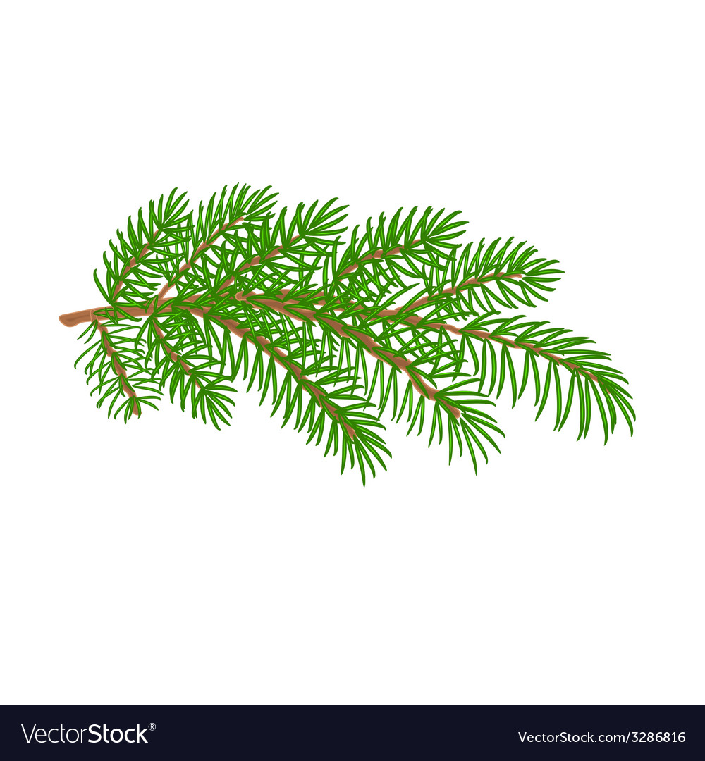 Spruce branch christmas tree vector | Price: 1 Credit (USD $1)