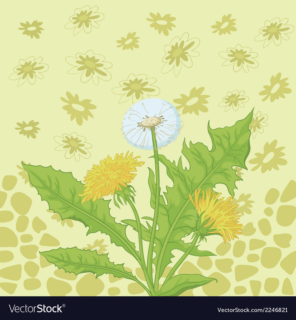 Flowers dandelion and abstract pattern vector | Price: 1 Credit (USD $1)