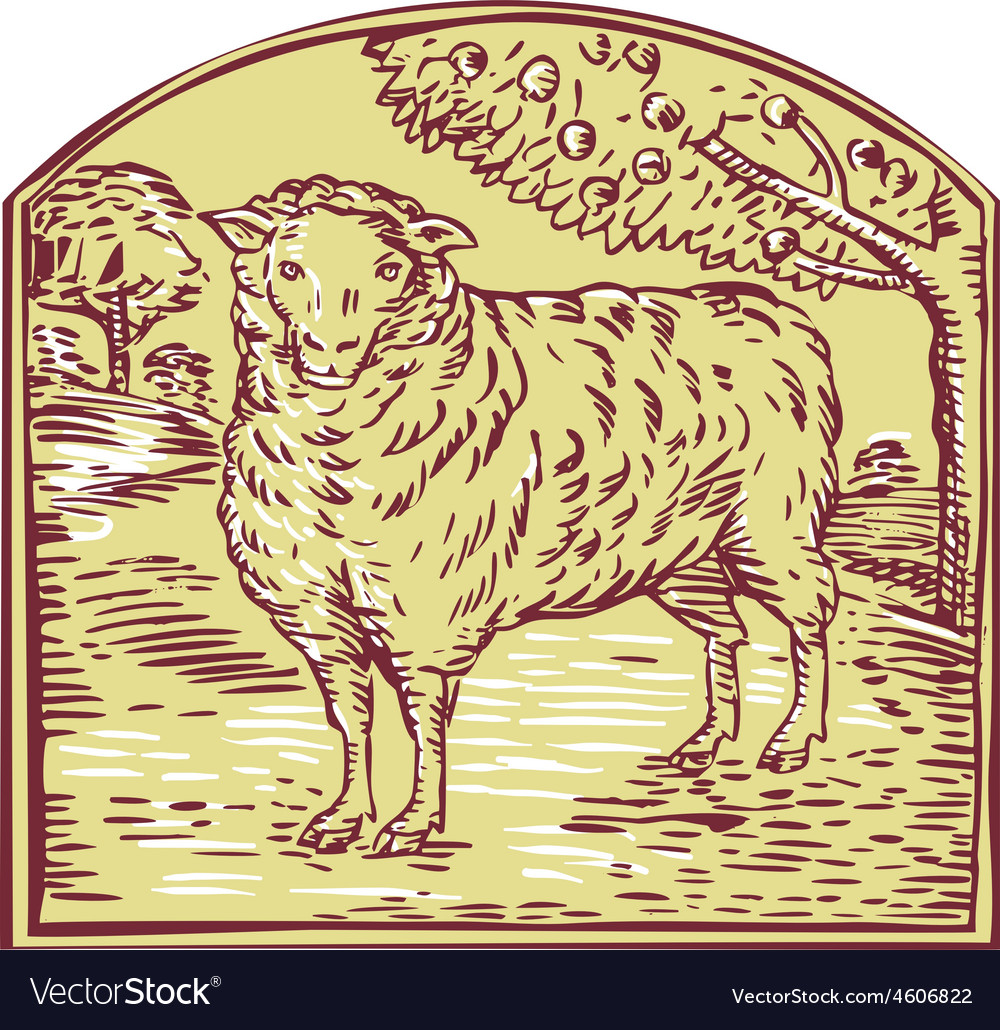 Sheep side pasture tree etching vector | Price: 1 Credit (USD $1)