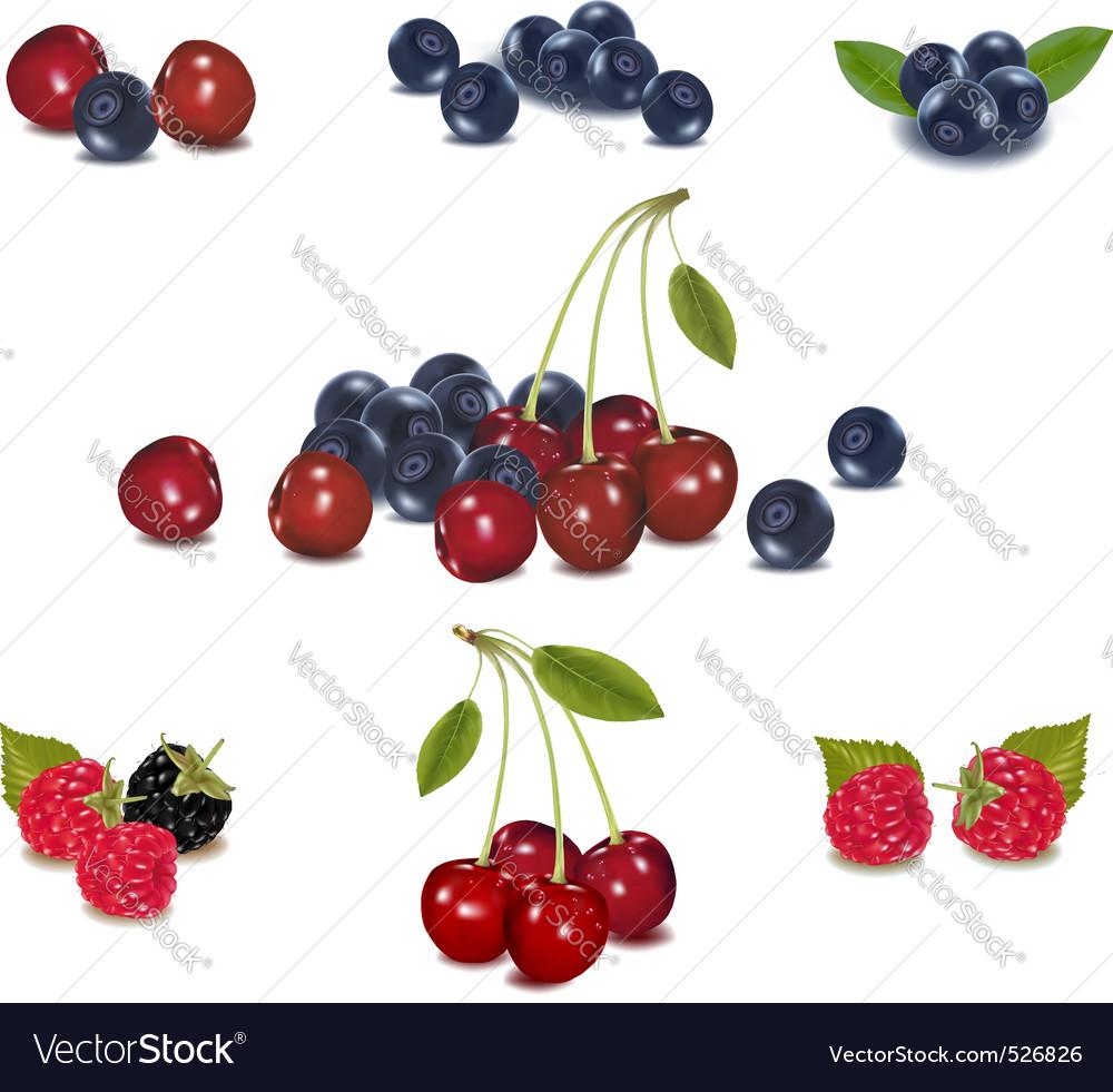 Mega set of berries vector   Price: 1 Credit (USD $1)