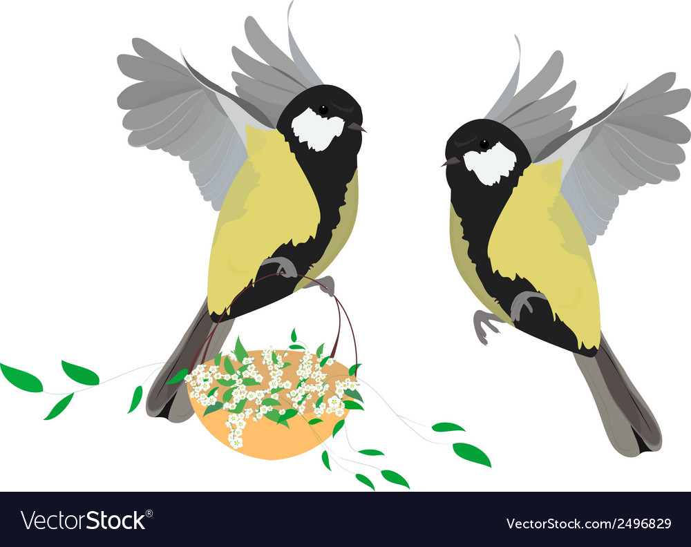 Great tit spring vector | Price: 1 Credit (USD $1)