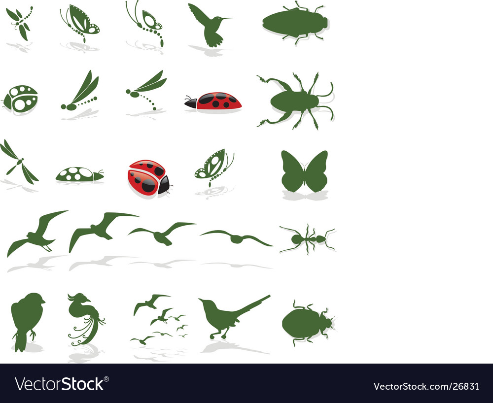 Bugs insects and birds vector | Price: 1 Credit (USD $1)