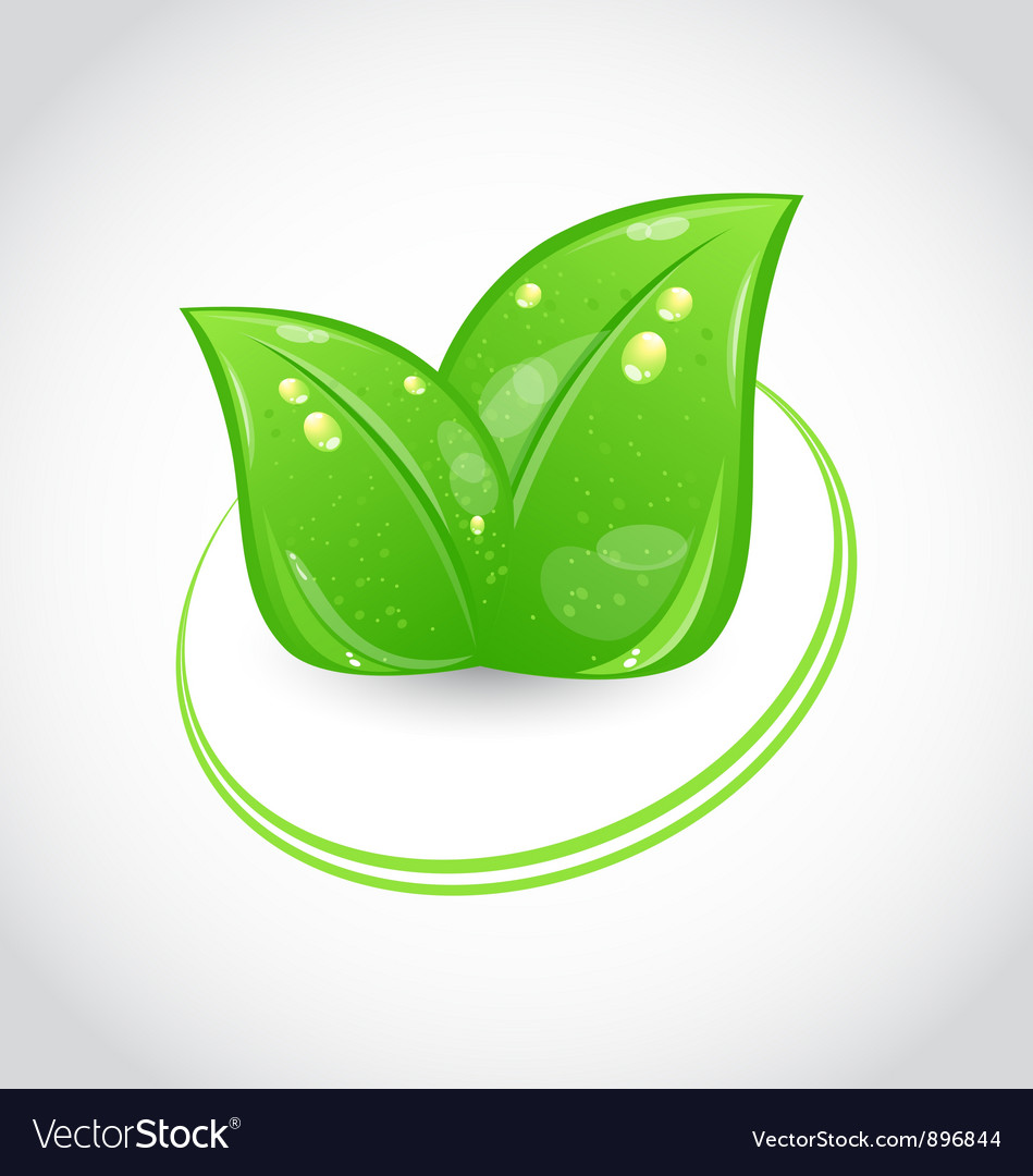 Green leaves ecologic emblem vector | Price: 1 Credit (USD $1)