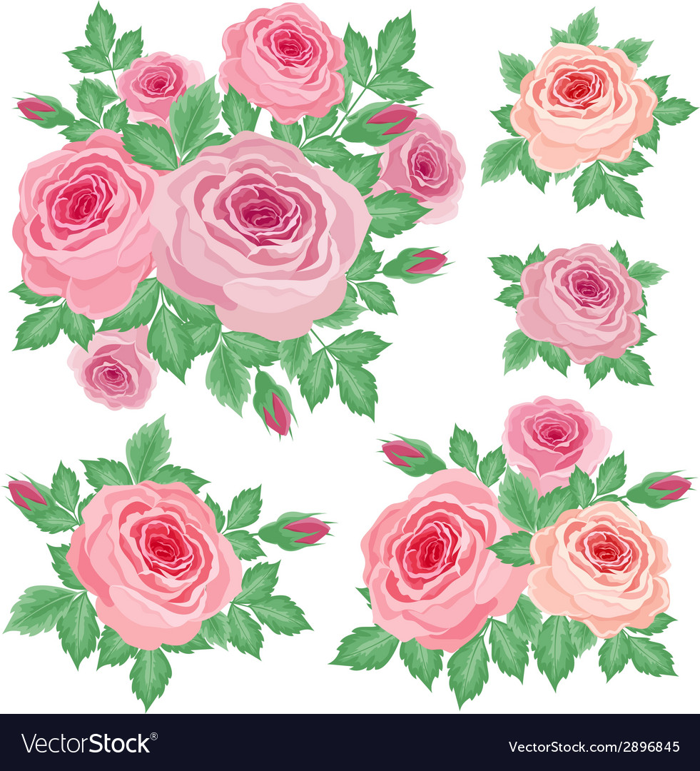 Set of roses vector | Price: 1 Credit (USD $1)