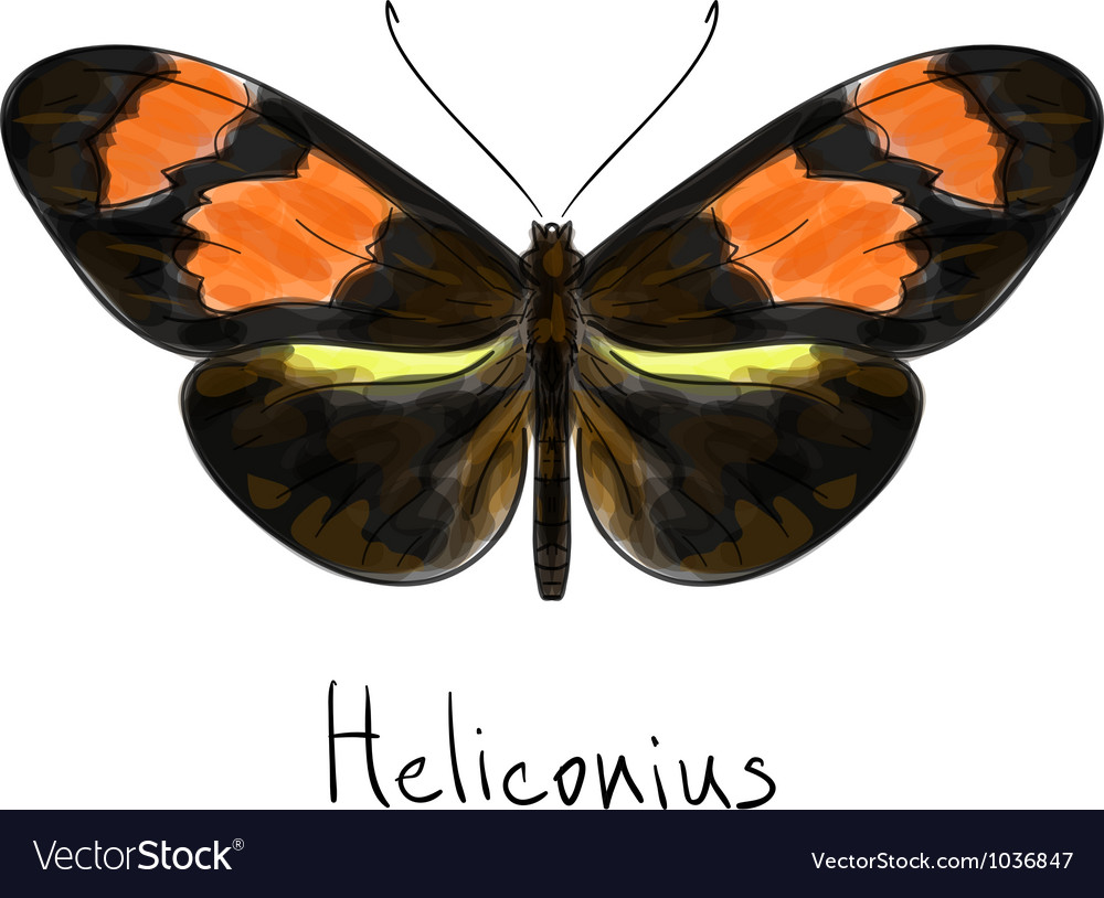 Butterfly heliconius watercolor imitation vector | Price: 1 Credit (USD $1)
