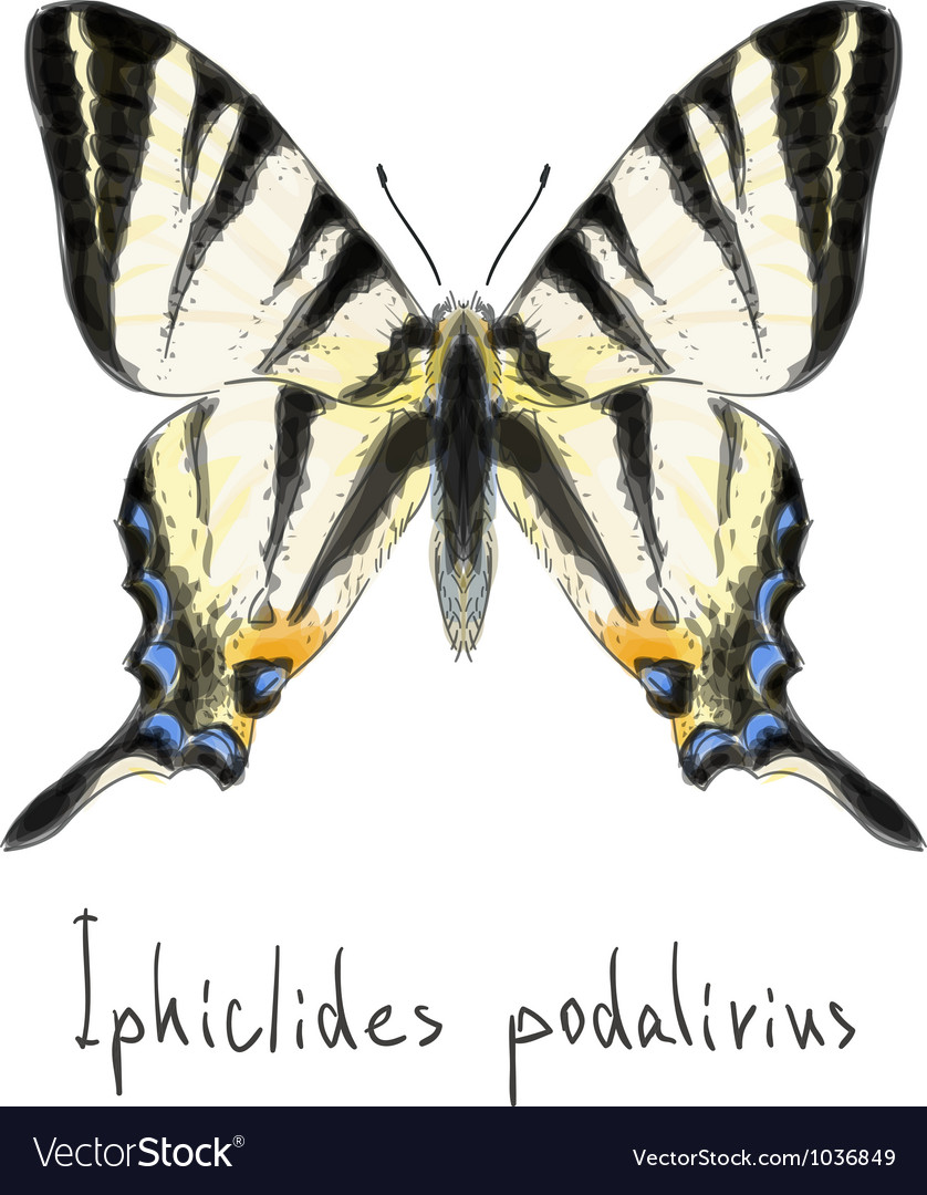 Butterfly iphiclides podalirius vector | Price: 1 Credit (USD $1)