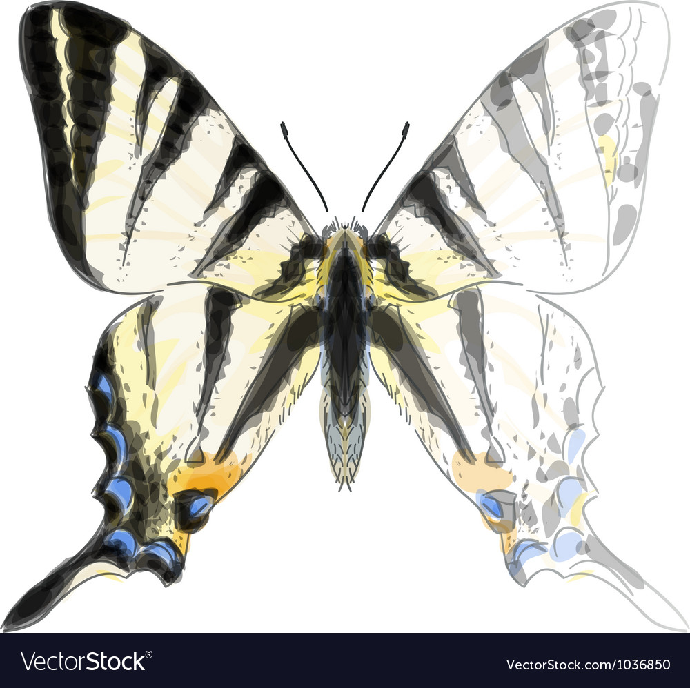 Butterfly iphiclides podalirium vector | Price: 1 Credit (USD $1)