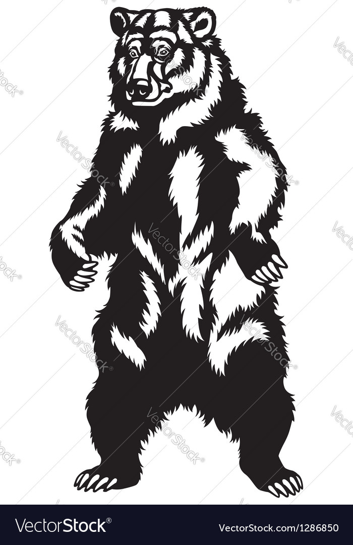 Grizzly bear black black vector | Price: 1 Credit (USD $1)