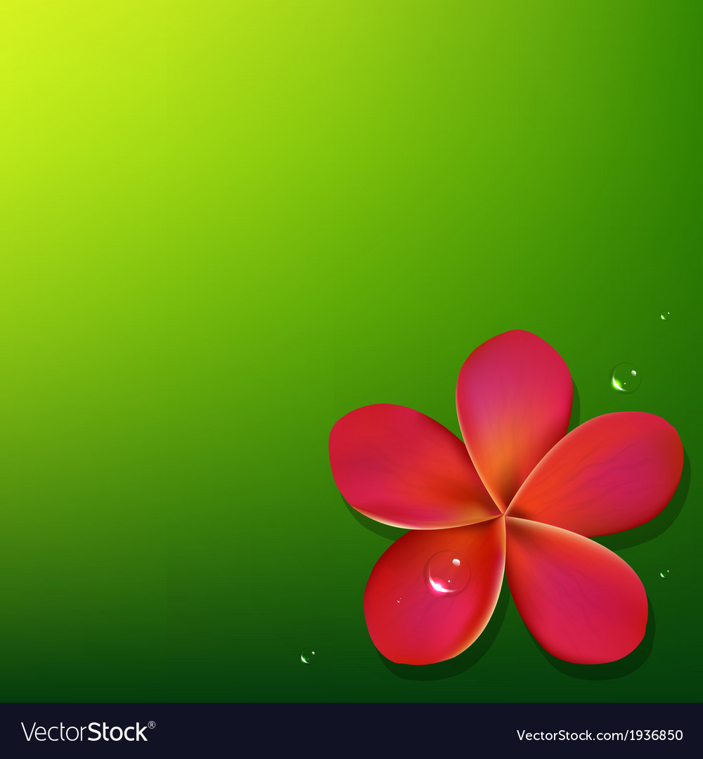 Pink frangipani with green background vector | Price: 1 Credit (USD $1)