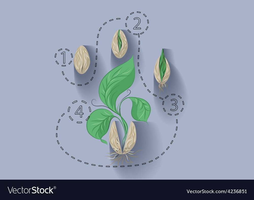 Plant growth vector | Price: 1 Credit (USD $1)
