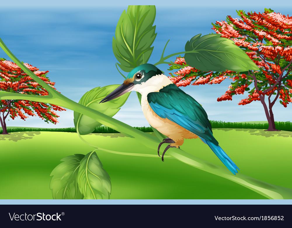 Kingfisher vector | Price: 1 Credit (USD $1)
