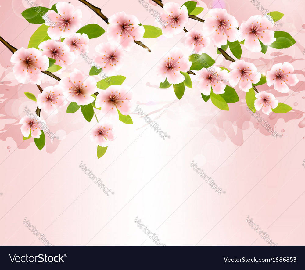 Nature background with blossoming sakura brunch vector | Price: 1 Credit (USD $1)
