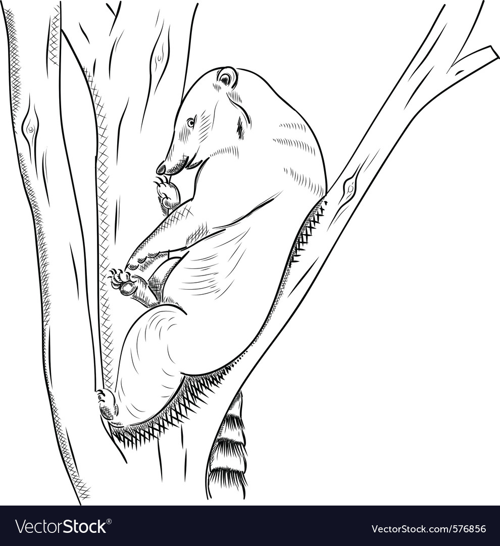 Small bear known as coati vector | Price: 1 Credit (USD $1)