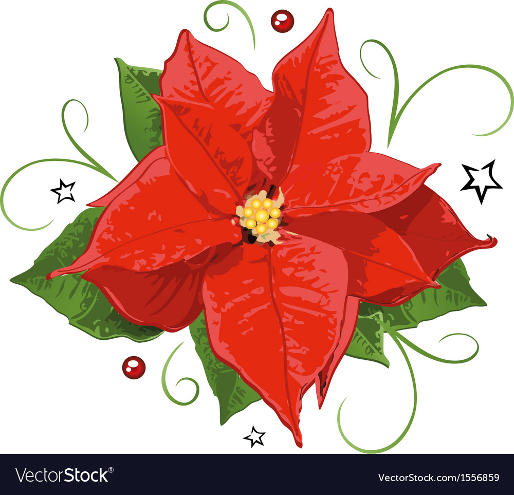 Poinsettia vector | Price: 1 Credit (USD $1)