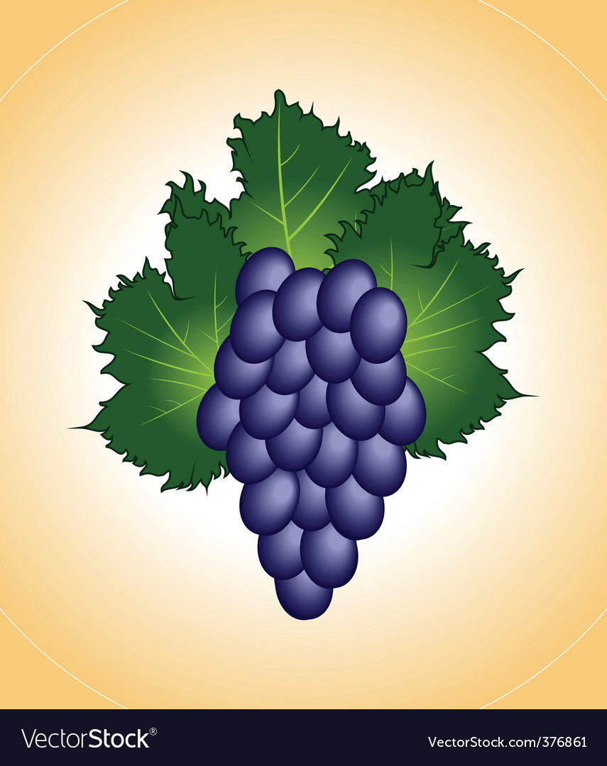 Close up purple grape isolated vector | Price: 1 Credit (USD $1)