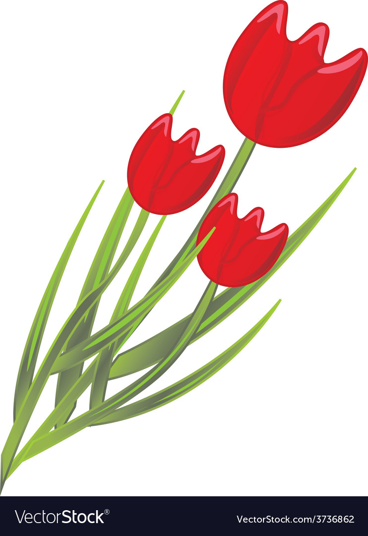 Red tulips vector | Price: 1 Credit (USD $1)