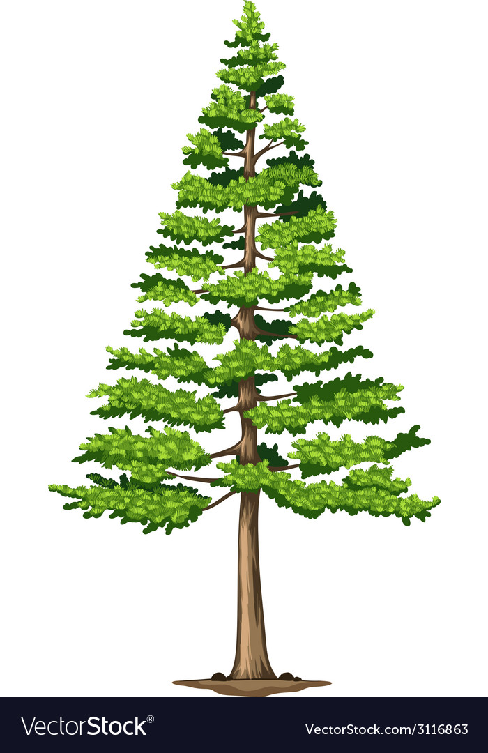 A green pine tree vector | Price: 1 Credit (USD $1)